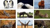 国际生物多样性日
