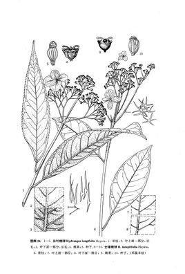 长形花境手绘效果图