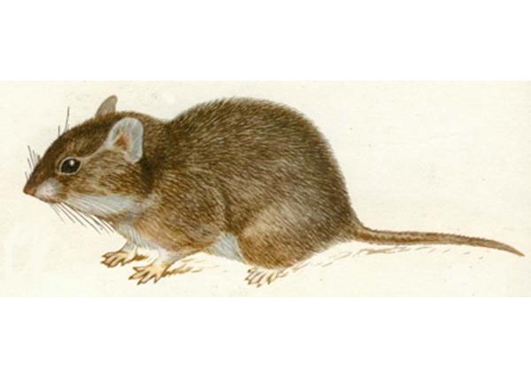 仓鼠的天敌是什么动物