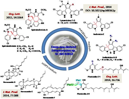 蛋白质代谢过程结构图