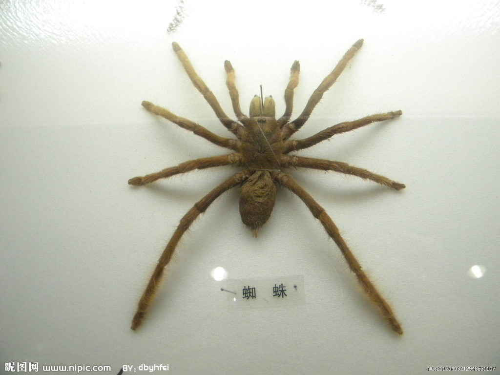 蜘蛛结网步骤 gif
