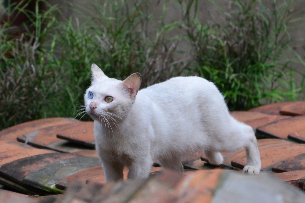 我最喜爱的动物 猫
