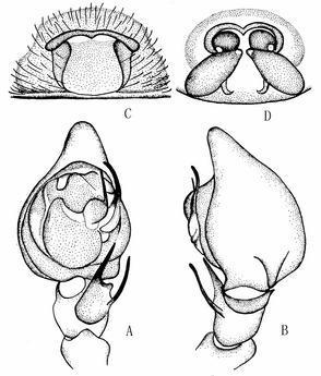蛲虫虫卵结构手绘图