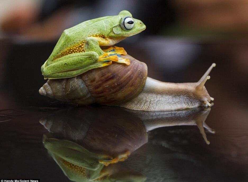 号儿蛙手绘图夸张