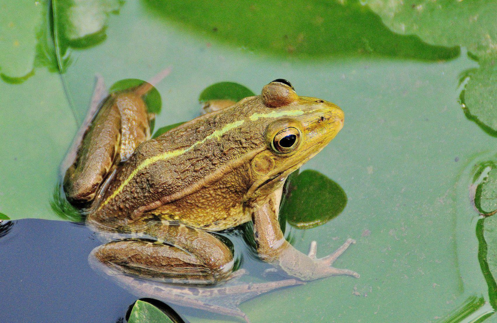 青蛙有没有脊椎