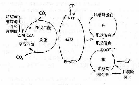 佾品弘能量净水机结构图