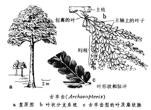 前裸子植物