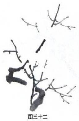 梅花形态结构模式图