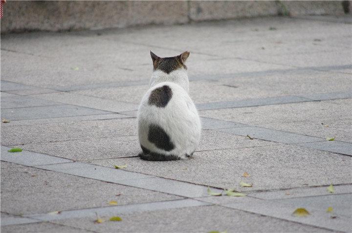 孤单的动物图片