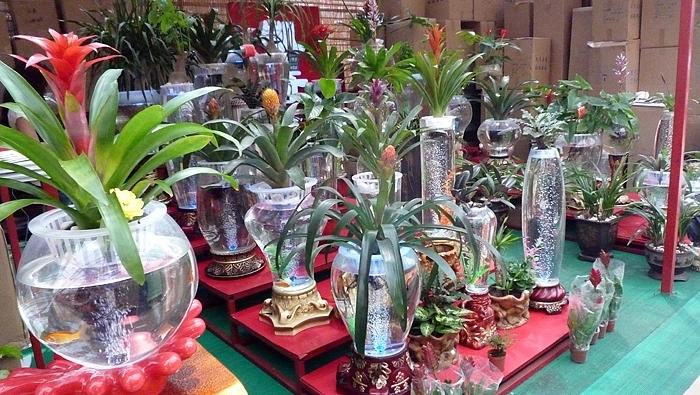 幼儿园水培植物图片