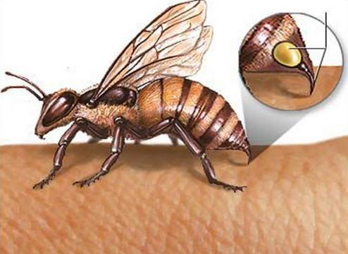 蜜蜂箱结构图片