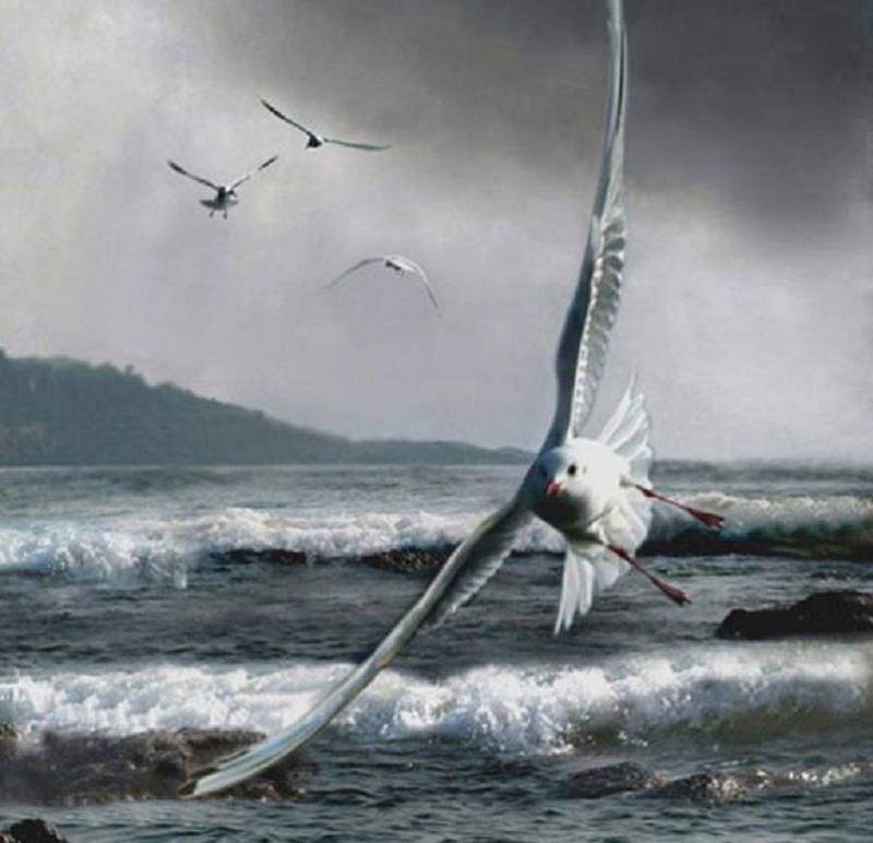 海燕413 电路图
